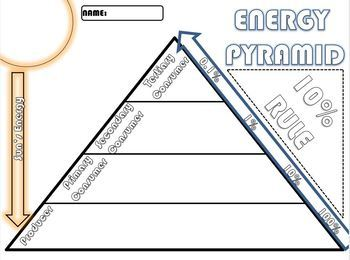 Energy Pyramid- Trophic Levels (Producer & Consumer) Doodle Note- FREE EXIT SLIP