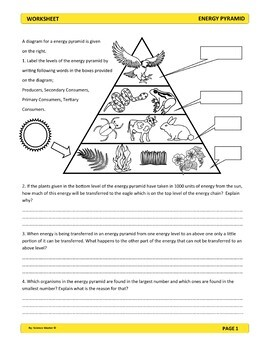 Energy Pyramid Worksheet