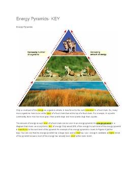 Energy Pyramids -- CLOZE Reading