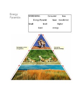 Energy Pyramids -- CLOZE Reading