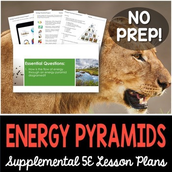 Energy Pyramids - Supplemental Lesson - No Lab