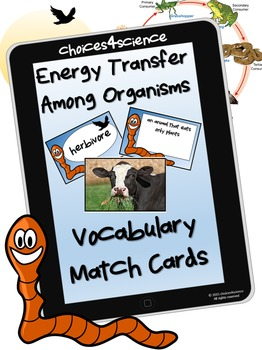 Energy Transfer Among Organisms ( TEKS 4.9A & TEKS 4.9B )