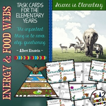 Energy and Food Webs