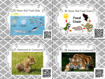 NGSS Aligned: Food Webs and Food Chains QR Code Task Cards