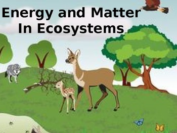 Energy and Matter in an Ecosystem