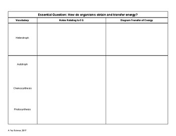 3 Column Notes for Energy and Metabolism