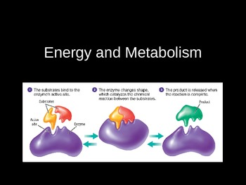 Energy and Metabolism (Enzymes) PowerPoint Presentation Lecture