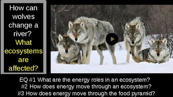 Energy flow in ecosystems, PowerPoint