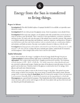 Energy from the Sun Is Transferred to Living Things