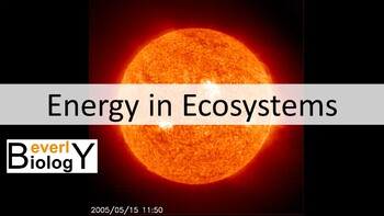 Energy in Ecosystems (Trophic levels) PowerPoint (with free handout)