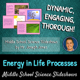 Energy in Life Processes: A Life Science Slideshow!