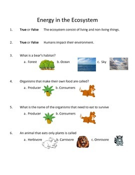 Energy in the Ecosystem Science