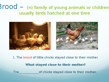 Engage NY 1st Grade ELA The Half Little Chick Vocabulary
