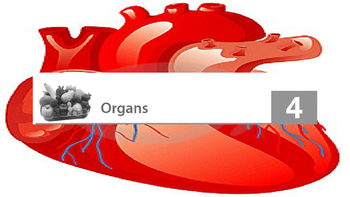 Engage NY 2nd Grade Module 10 The Human Body - Lesson 4