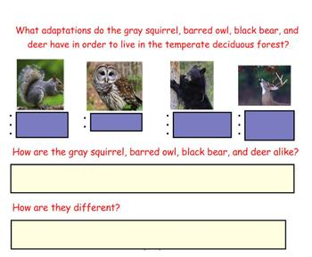 Engage NY First Grade ELA Domain 8 Animals and Habitats Lesson 5