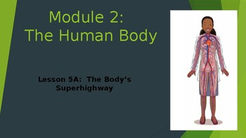 Engage NY:  Module 2 - Lesson 5A:  The Body's Superhighway