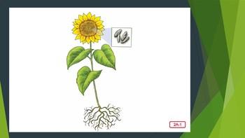 Engage NY:  Module 4 - Plants:  Lesson 2A - Plant Parts