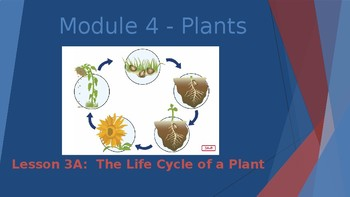 Engage NY:  Module 4 - Plants:  Lesson 3A - The Life Cycle of a Plant