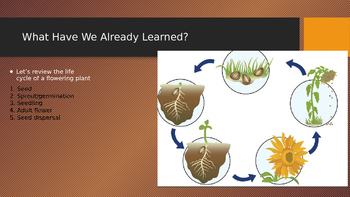 Engage NY:  Module 6 - Lesson 6:  Which Came First, the Chicken or the Egg?