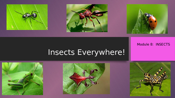 Engage NY:  Module 8:  Insects Everywhere Lesson 1A