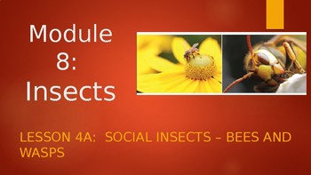 Engage NY:  Module 8 - Insects:  Lesson 4A - Bees and Wasps