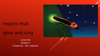 Engage NY:  Module 8:  Insects that Glow and Sing Lesson 6A