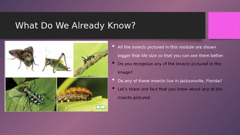 Engage NY:  Module 8 - Lesson 1:  Insects Everywhere!