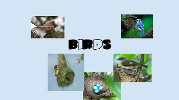 Engineer A Bird (Animal Adaptations, Biomes, Habitats, Life Cycles, Dichotomous)