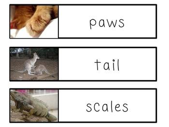 English Animal Adaptations