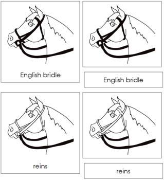 English Bridle Nomenclature Cards