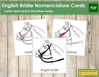 English Bridle Nomenclature Cards (Red)