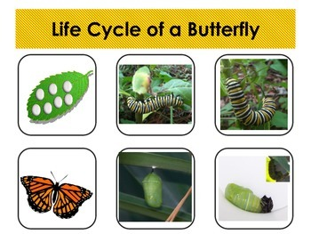 Comparing Life Cycles