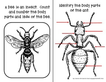 English Interactive Science Journals for K/1: Insects, Coverings, Plants & more!