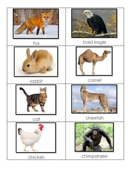 English Language Learners Vocabulary Cards