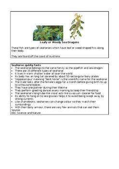 English / Literacy - Facts about Seahorses