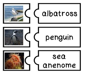 English Marine Life/Animals - Flashcards and games