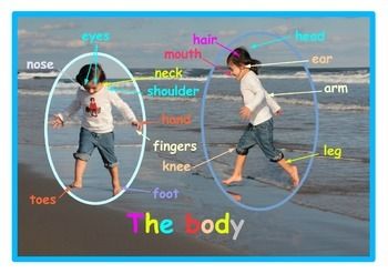 English Parts of the body Poster  for ESL,EAL . A3 size