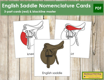 English Saddle Nomenclature Cards (Red)