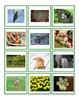 English Spring flashcards & BANG game