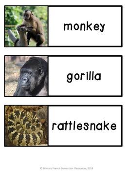 English Zoo Animals - Flashcards, Word wall words, BANG game cards