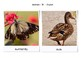 English to Spanish Flash Cards real pics cute animals