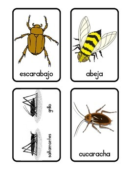English/Spanish Bugs Memory Cards and Flash Cards