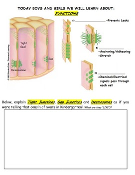 Interactive Notebook Unit Packet: Histology (Tissues)-Unit 2 in Series (Fall)