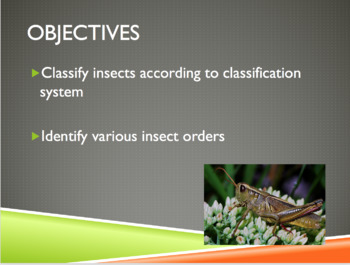 Entomology Lesson: Bugs 101 PowerPoint and Guided Notes