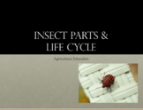 Entomology Lesson: Parts and Life Cycle PowerPoint, and Guided Notes