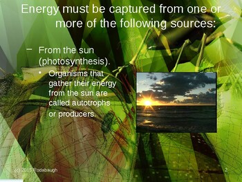 Env. Biology - Lecture 6 - Energy & Nutrients