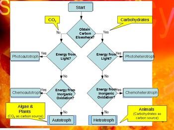 Env. Biology - Lecture 9 - Energy Transport