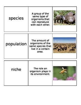 Environmental Changes Vocabulary Cards