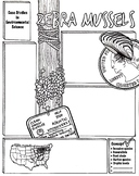 Environmental Science Zebra Mussels Sketch Notes
