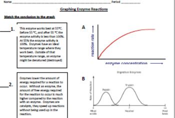 Enzyme Graphing By Dealbiology Teachers Pay Teachers